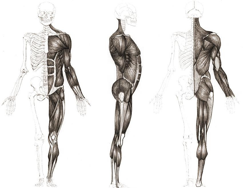 Clase 02. El cuerpo humano - MarmotFish Studio